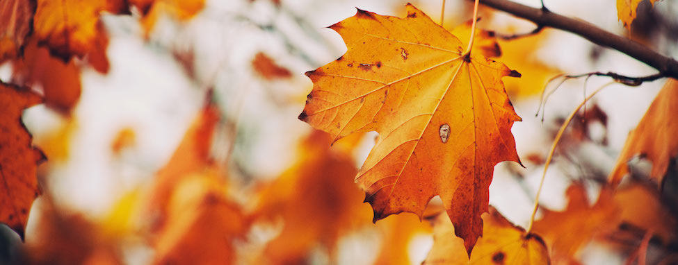 fall into good data management